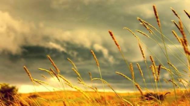 Πρώτη νίκη στο ευρωκοινοβούλιο για την ελευθερία των σπόρων