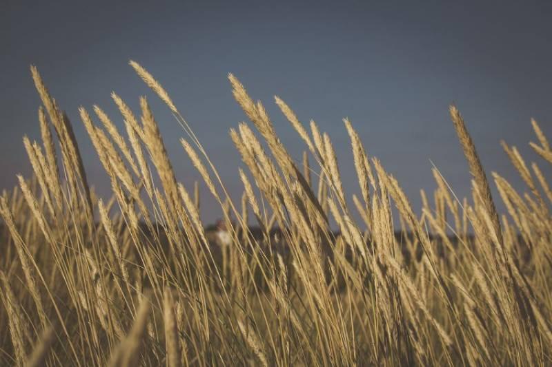 Η άλωση της γεωργίας από τις τράπεζες